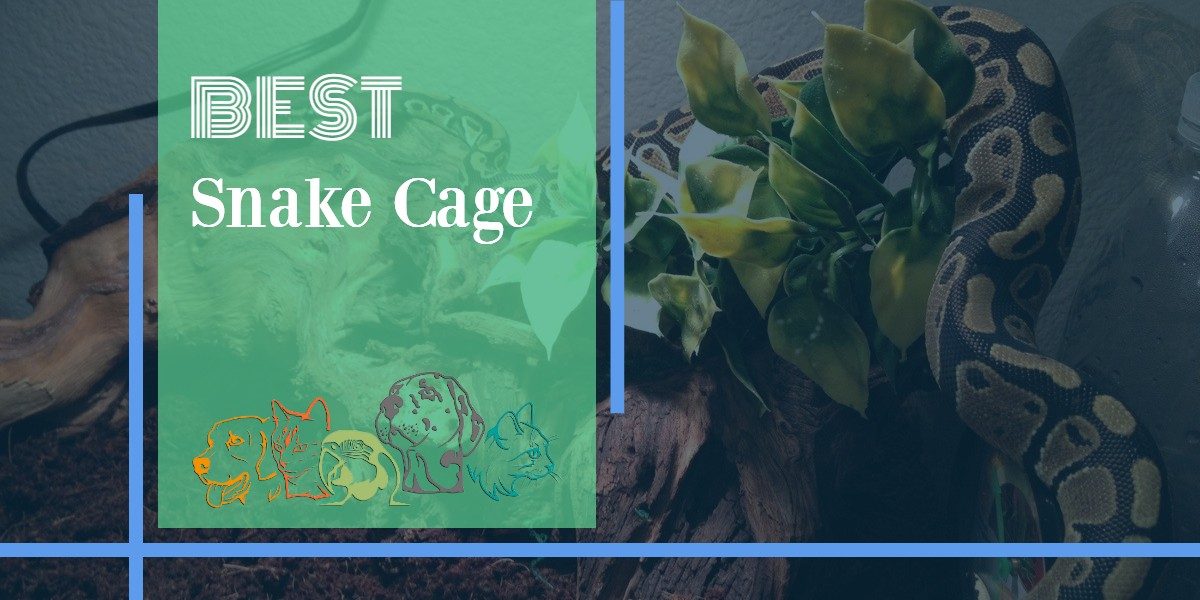 Best Snake Cage