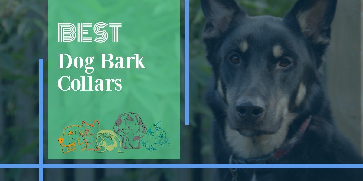 Dog Bark Collars