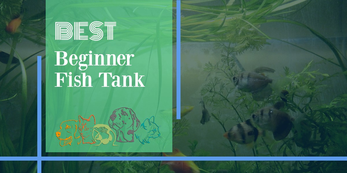 Fish Tanks For Beginners