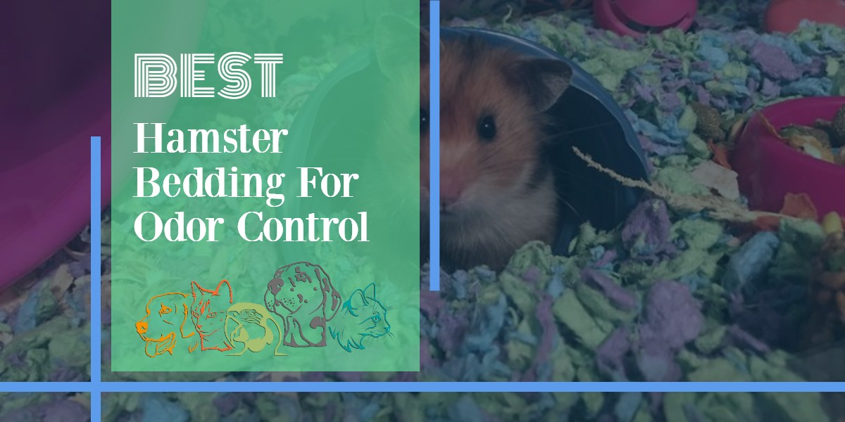 Hamster Bedding For Odor Control