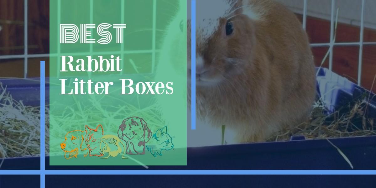 Rabbit Litter Boxes