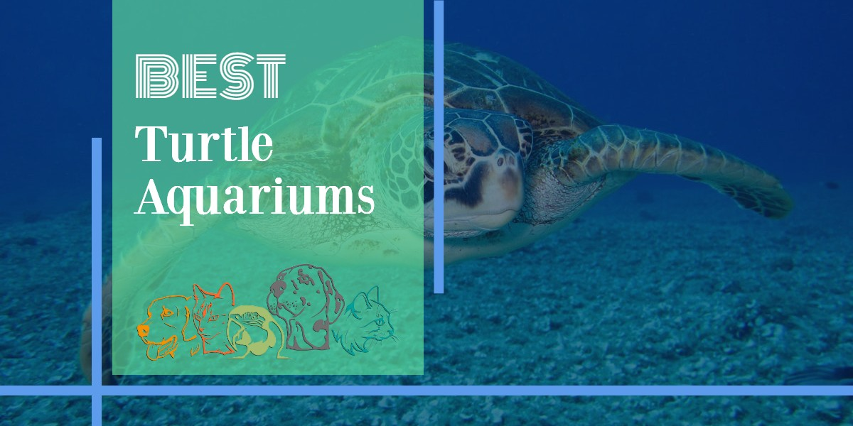 Turtle Aquariums - Featured Image