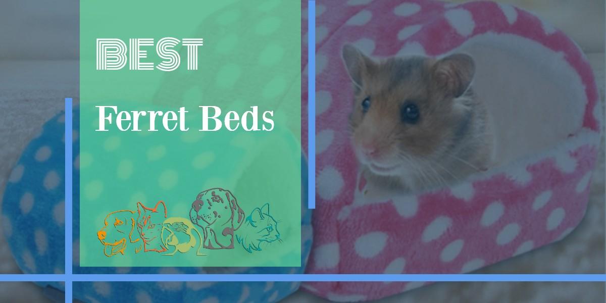 Ferret Beds