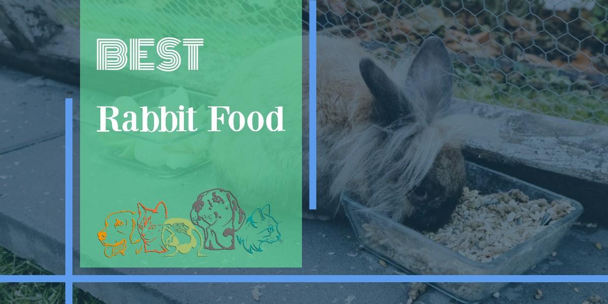 Rabbit Food - Featured Image