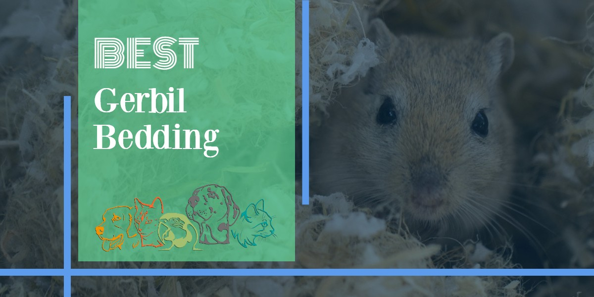 Gerbil Bedding