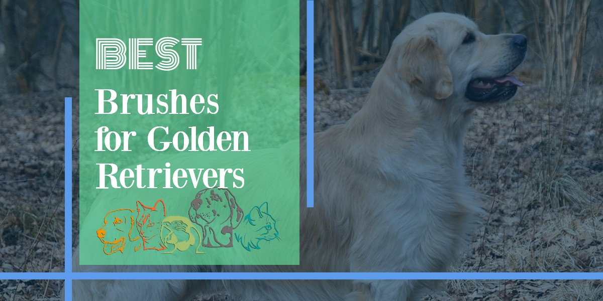 Brushes For Golden Retrievers