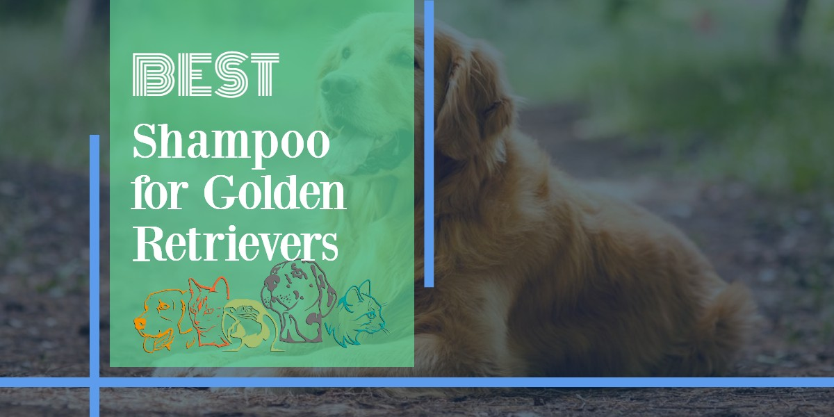 Shampoo For Golden Retrievers